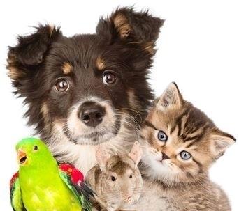 öffnungszeiten hundehilfe koblenz