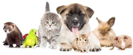 Hunde, Katzen, Meerschweinchen Hamster