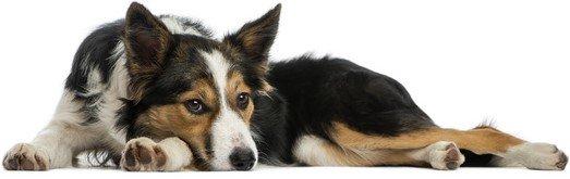 Tierschutzverein-Tierheim Hund